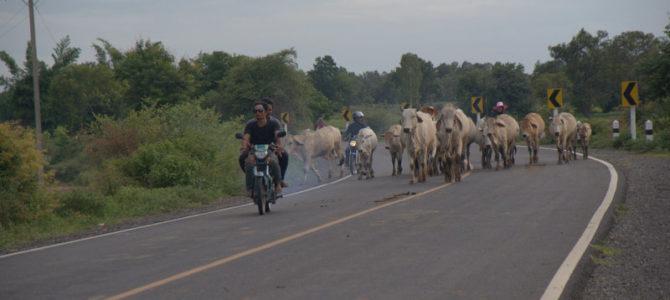 1450 km pickupem: Isaan, Mekong, pamiątki Khmerów