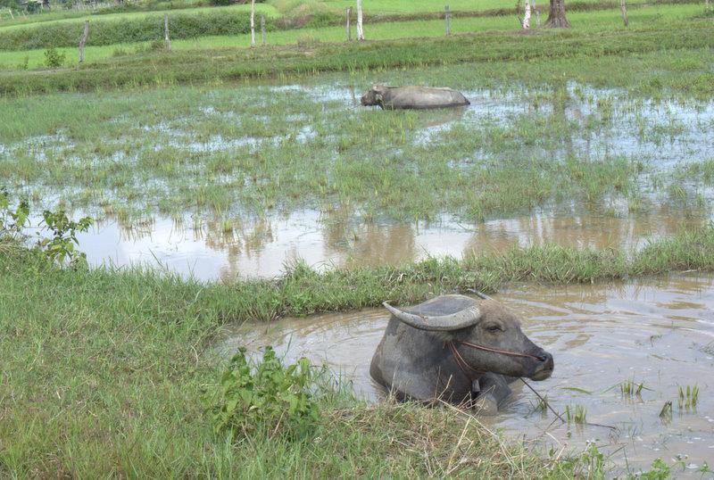 1450 km pickupem: Isaan, Mekong, pamiątki Khmerów 19