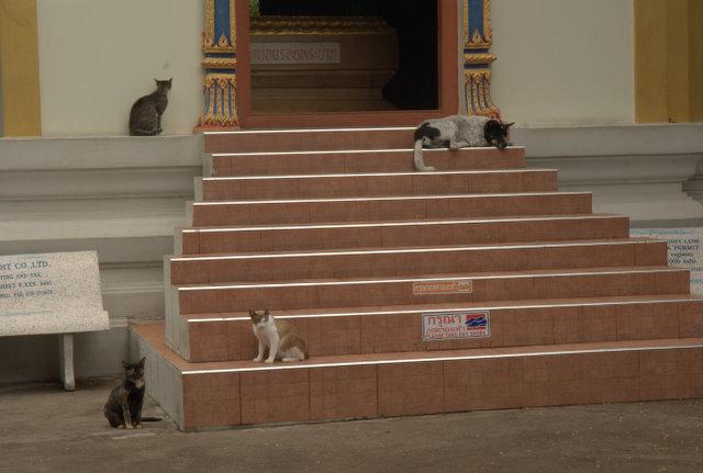Do Pattayi (niekoniecznie) i byle nie dostać mandatu! 26