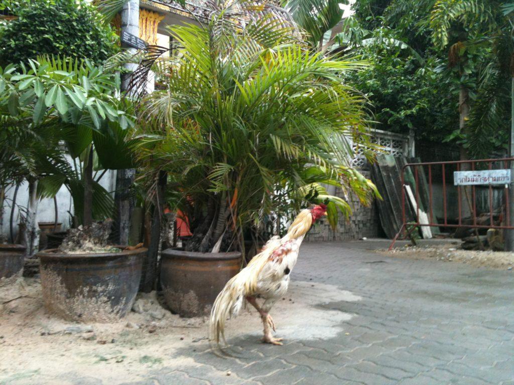 Do Pattayi (niekoniecznie) i byle nie dostać mandatu! 16