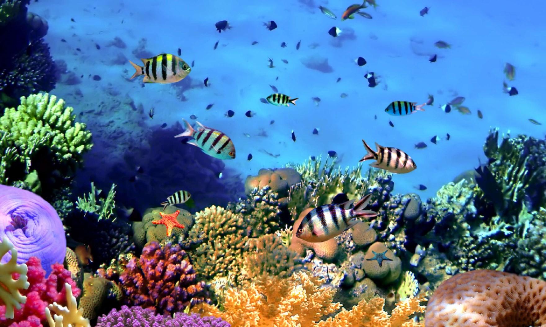 Trzy rajskie wyspy, pierwszy snorkeling i... 20
