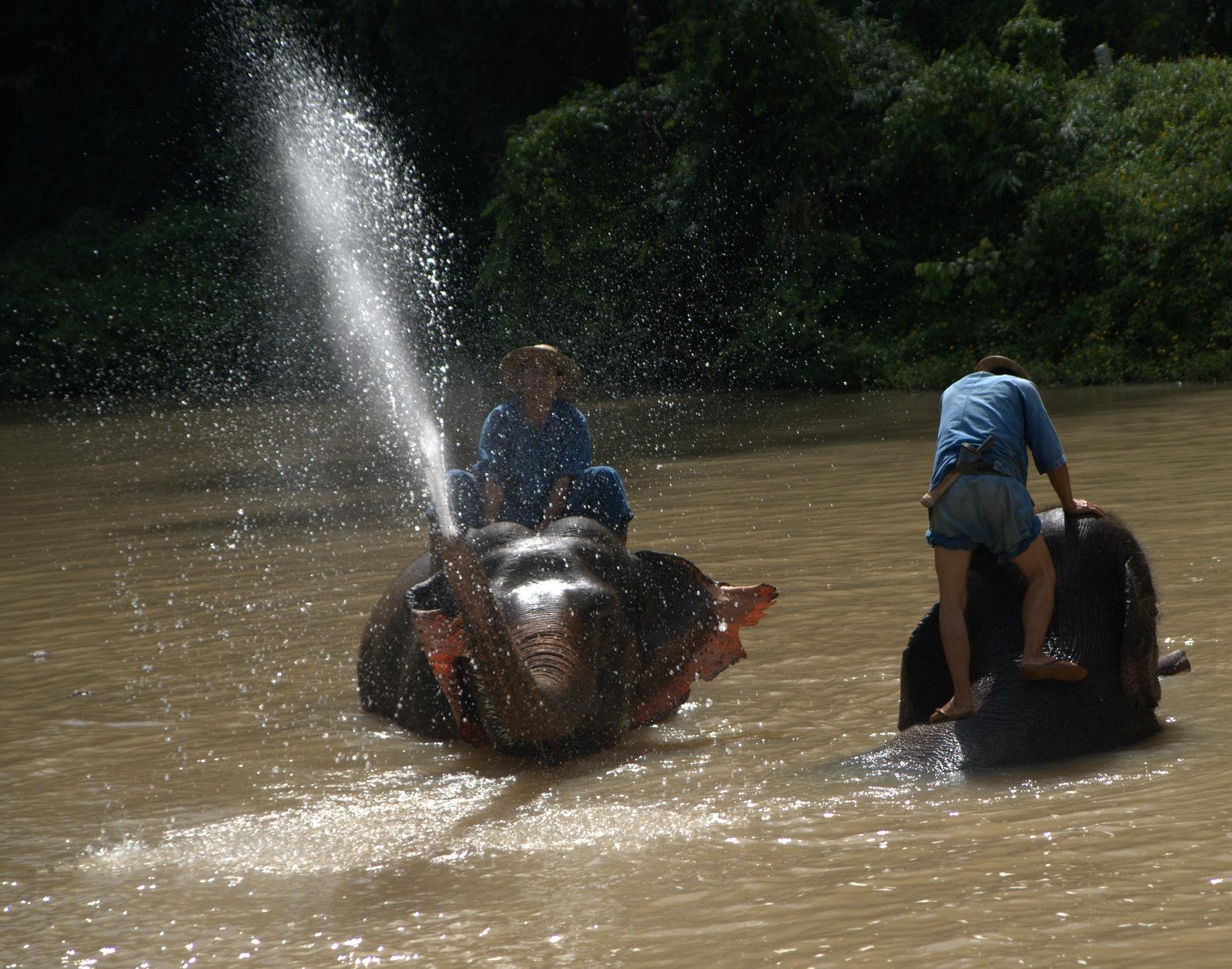 Miasta kultu, miasta małp, ale najbardziej Lampang 142