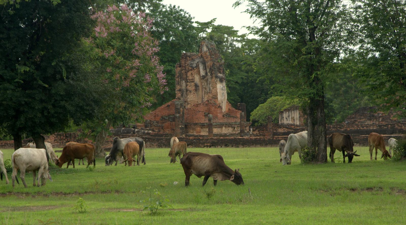 Miasta kultu, miasta małp, ale najbardziej Lampang 155