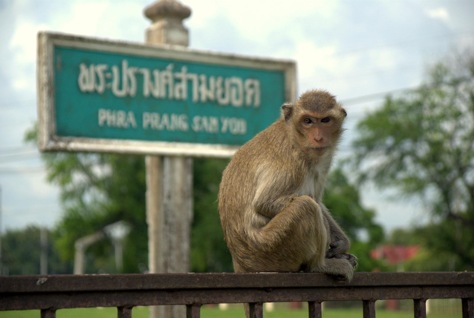 Miasta kultu, miasta małp, ale najbardziej Lampang 170