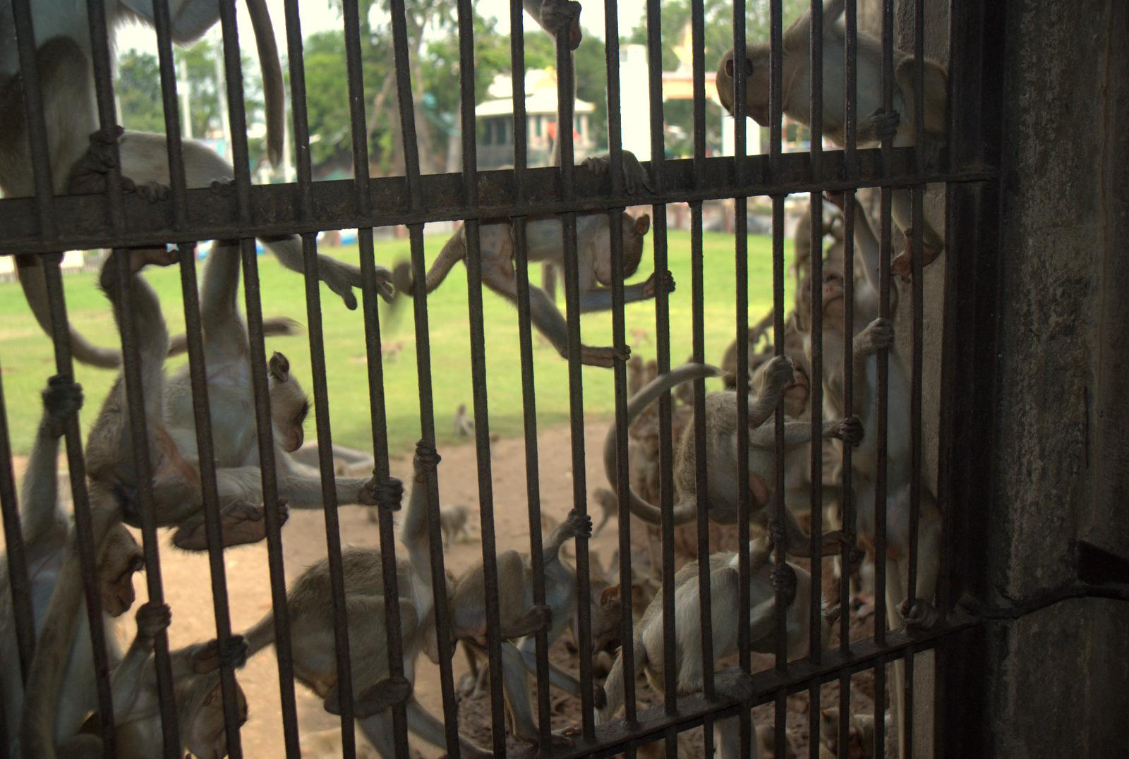 Miasta kultu, miasta małp, ale najbardziej Lampang 172