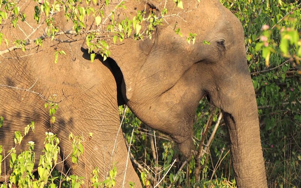 Etap 1: Opuszczone lotnisko i wolne słonie w Udawalawe 60