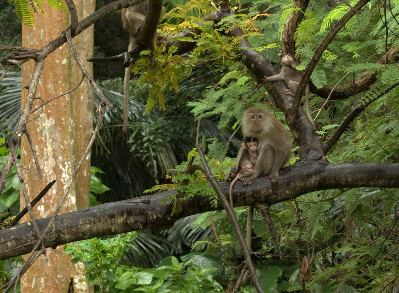 Jeziorem Cheow Lan, dżunglą, na plażę Railey 125