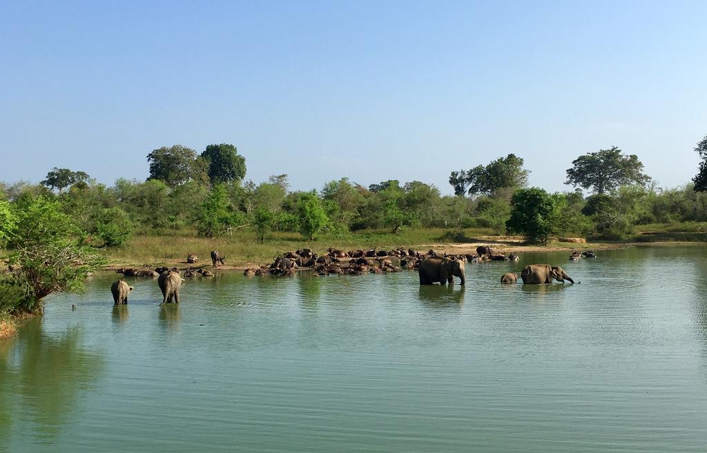 Etap 1: Opuszczone lotnisko i wolne słonie w Udawalawe 58