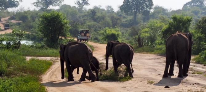 Etap 1: Opuszczone lotnisko i wolne słonie w Udawalawe