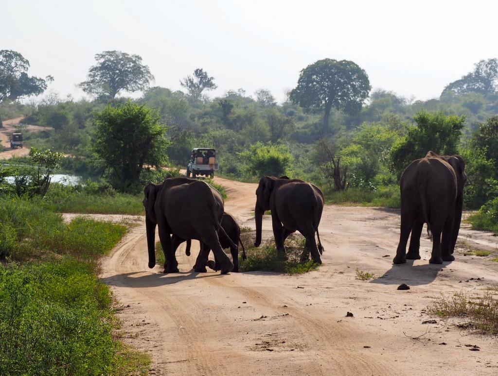 Etap 1: Opuszczone lotnisko i wolne słonie w Udawalawe 62
