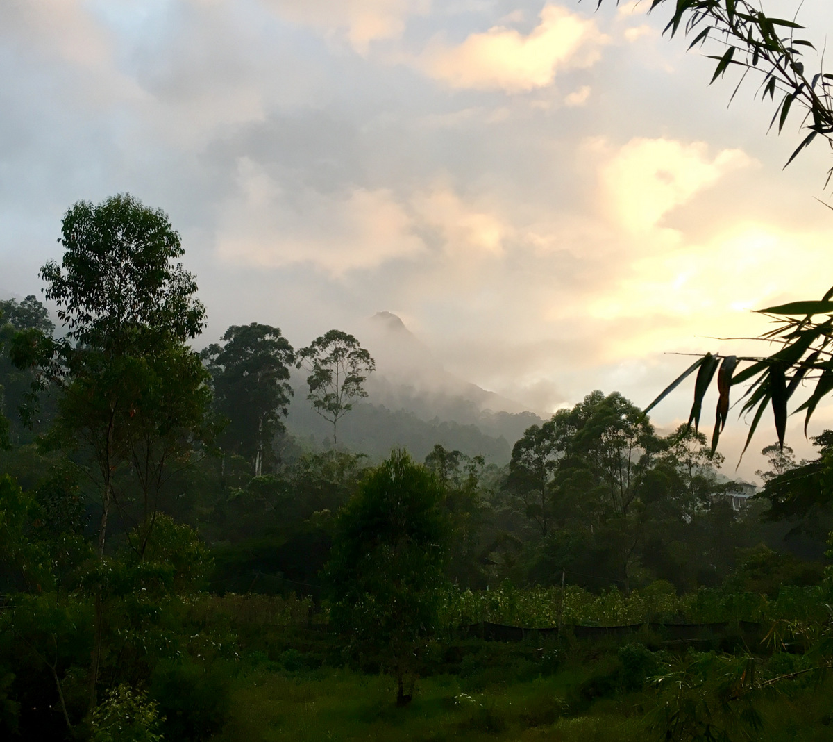 Etap 5: Adam's Peak. Schodami do słońca 14