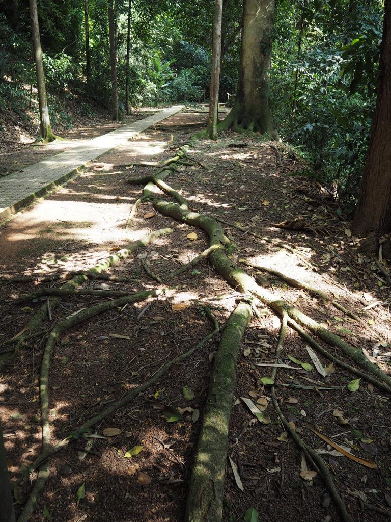 Etap 3: Kuala Lumpur & Batu Caves. Jaskinie, ścieżki w lesie i deszcz... 19