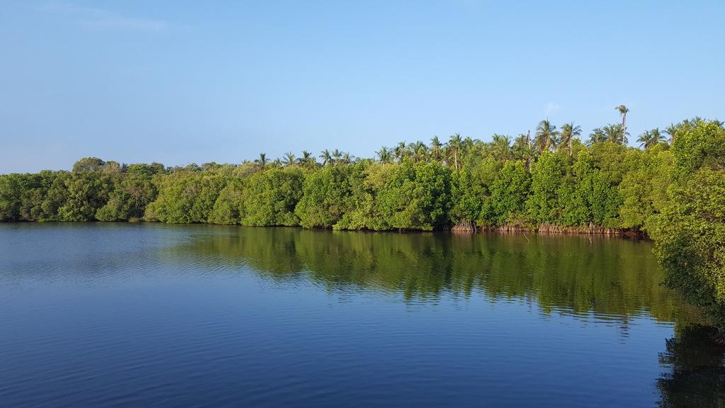 Etap 7. Tangalle Lagoon. Żółwie, warany i inne ptaki laguny 5