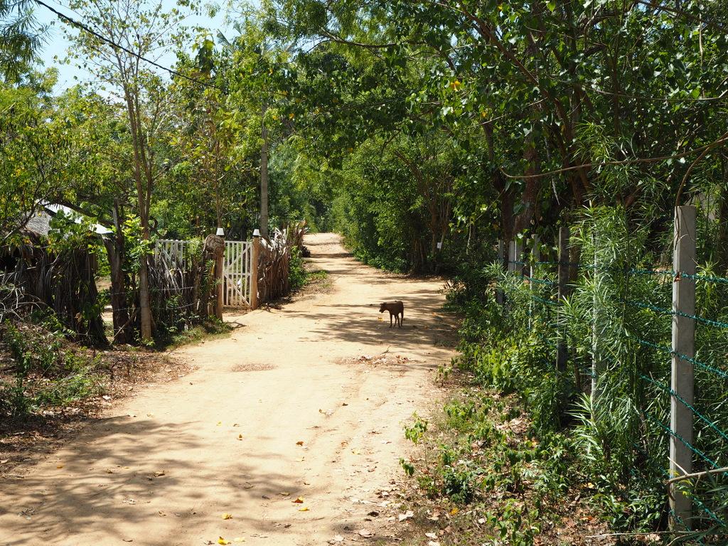 Etap 7: Tangalle Beach. O kozie, która była psem i małpach czmychających spod kół 9