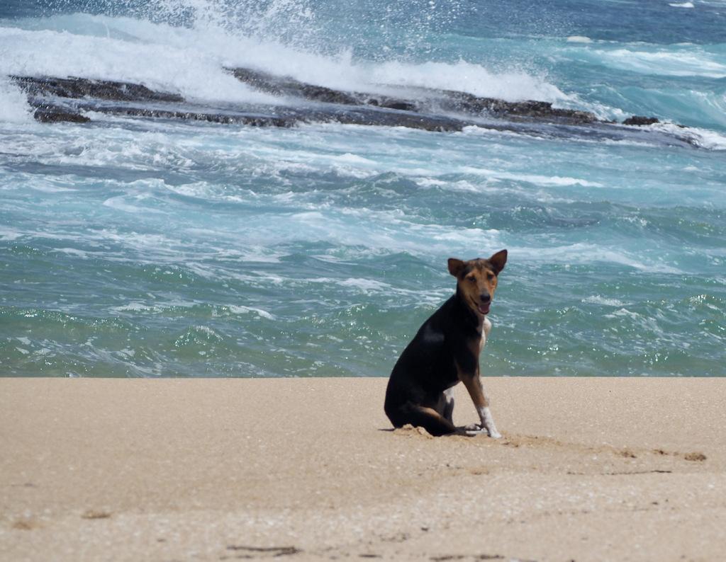 Etap 7: Tangalle Beach. O kozie, która była psem i małpach czmychających spod kół 40