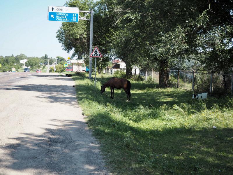 Ukraina autostopem? Dzień 4: A Mołdawia autostopem da się też? 21